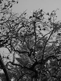 秋ですねⅡ - 風の吹くまま