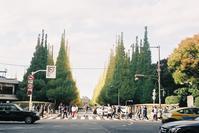 Snap No242 - 東京Shy 写歩く