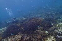17.11.11次第に北風強く - 沖縄本島 島んちゅガイドの『ダイビング日誌』