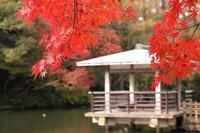 高岡古城公園 - gracefully heart