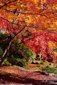 大芦渓谷の秋・・ - ぶらりカメラウォッチ・・