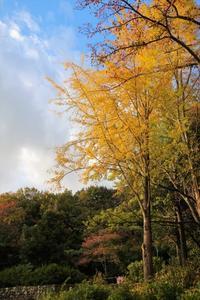 秋を感じて - ココロのままにゆるりぱちり