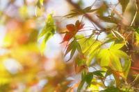 autumn colors - やさしい風に誘われて