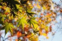 秋の午後 - やさしい風に誘われて