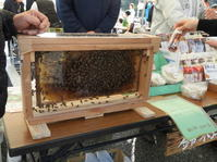 豊かな自然の中でハチミツも採れるんです^^ - 柴まみママの大多喜便り
