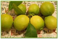 収穫したレモン♪/ランタナとピラカンサ/初サテンドレス作り(途中) - DOUBLE RAINBOW