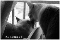 アートな作品 - ぎんネコ☆はうす