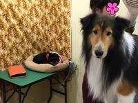 店長の日記〜犬と猫〜 - トリミングサロンオリーブスタッフ日記