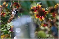 花とすずめ。 - Season of petal