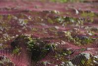 三浦の畑が美しくなるシーズン - 素顔のままで