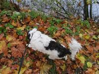 11月11日の雨の中の散歩 et 6キロになったべべパンダ - フランス Bons vivants des marais