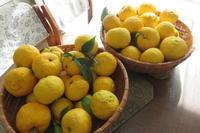 どっさり届いた柚子とスナップエンドウの種まき - 光さんの日常