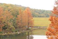 *公園のお散歩*~小さい秋見つけた - 静かな時間