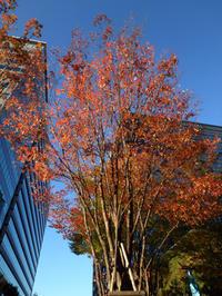 東京の街でも紅葉が始まりました。 - ご無沙汰写真館