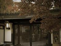 【番外編】夕暮れの馬籠宿 - 広小路通散歩(旧御堂筋散歩)