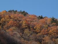 『馬瀬川から東仙峡金山湖の紅葉風景~』 - 自然風の自然風だより
