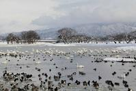 瓢湖(新潟県)(2012年2月) - ノラくんの世界Ⅱ