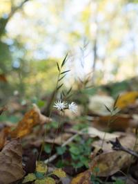 11月3日高梁自然公園 - 風まかせ、カメラまかせ