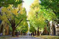 November*陽だまりさんぽ珍道中part1 - 陽だまりベンチ+me