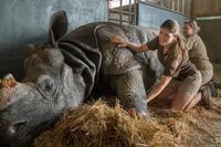 世界最高齢のインドサイが死亡 - ごきげんよう 犀たち