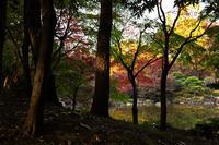 森公園の紅葉 - 彩りの軌跡