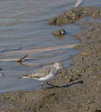 沼で見た鳥さん~☆ - takiのカメラ散歩~☆