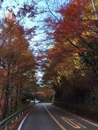 紅葉の秋金剛山の麓をぶらり~♪ - 榎建設 生活楽しみ隊 『嫁さんのブログ』
