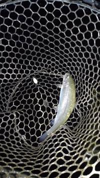 2017釣行NO.33(11/12)座間養魚場でプラ!? - ボウズマンのヘッポコ釣行記