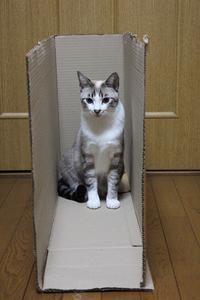 猫の好きなもの - ぎんネコ☆はうす