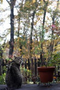 四十雀さん - 小さな森のキキとサラ