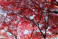 高蔵寺の秋 - 丹馬のきょうの1枚