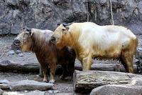 「テン」と「風華」 - 動物園放浪記
