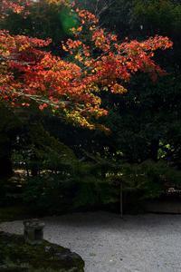 ◆紅葉情報◆もみじが色づいて!【日本庭園有楽苑】 - 名鉄犬山ホテル情報