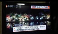 東山動植物園 紅葉ライトアップ2017 - 愛知・名古屋を中心に活動する女性ギタリストせきともこのブログ