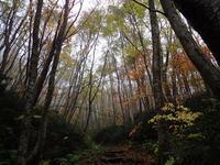 紅葉の大万木山⓶ - 清治の花便り