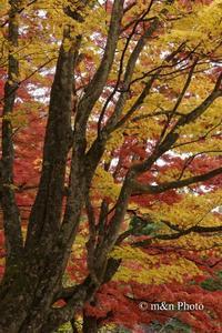 晩秋の裏磐梯へ10 - 季節のおくりもの
