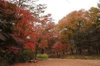 11月の赤城自然園 ~紅葉散歩~ (撮影日:2017/11/8) - toshiさんのお気楽ブログ