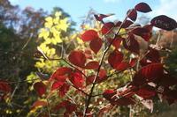 穏やかな秋の日が・・・ - 宮迫の! ようこそヤマボウシの森へ