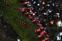 ★ 今年も紅葉の季節が - うちゅうのさいはて