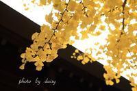 ブログ再開します♪ - ロマンティックフォト北海道☆カヌードデバーチョ