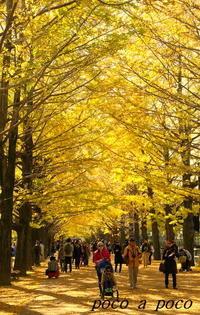 昭和記念公園の「黄葉紅葉まつり」へ♪ - ぽこあぽこ的生活