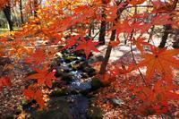 赤城自然園の紅葉は・・・F1.2レンズを試す - 『私のデジタル写真眼』