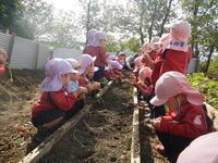 たまねぎの苗を植えました!!~あひる組・満3・年少組~ - みかづき第二幼稚園(高知市)のブログ
