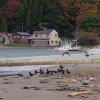 ソデイカの季節 - Beachcomber's Logbook