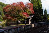 京都の紅葉 2017 〜3〜 - ◆Akira's Candid Photography