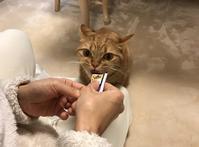 大好物の シーバ とろ〜り と 雑談 - パンと猫