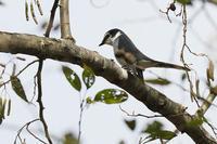 初見の鳥さんです。 - takiのカメラ散歩~☆
