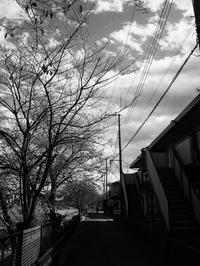土手沿いの道 - 節操のない写真館