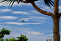 木々の間から - 南の島の飛行機日記
