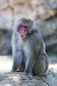 11月17日(金)コツコツと - ほのぼの動物写真日記